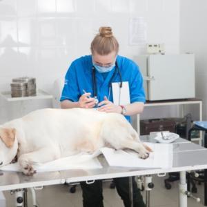 犬のガンと治療法