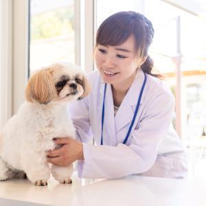 愛犬の膝蓋骨脱臼の原因と症状