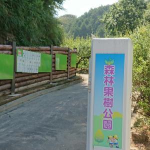 掛川森林果樹公園~果樹もハイキングもカフェもあり~