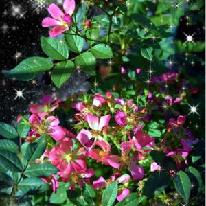 ★・゚・冬空に咲く桜・゚・★