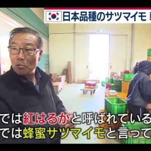 韓国人「韓国が無断で盗んだ日本のサツマイモ」