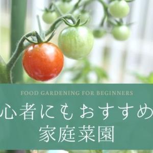 実際に育ててみた!プランターでできる、初心者にもおすすめの家庭菜園