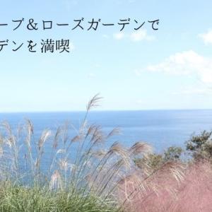 熱海の人気スポット アカオハーブ&ローズガーデンで絶景の庭を楽しんできました