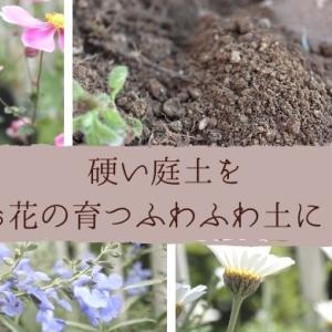 カチカチ粘土質の土を柔らかくして花壇を作った記録