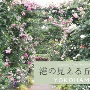 港の見える丘公園(横浜)いやしのバラ庭を散策