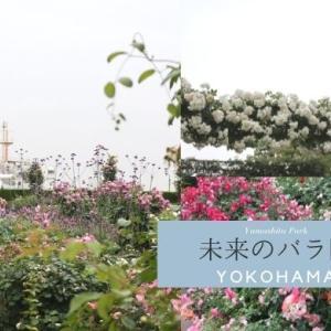 山下公園「未来のバラ園」で横浜の景色とバラを楽しむ