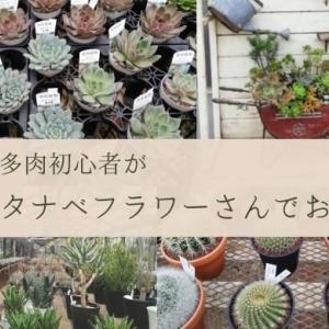 神奈川県の多肉植物専門店「タナベフラワー」に行ってきました