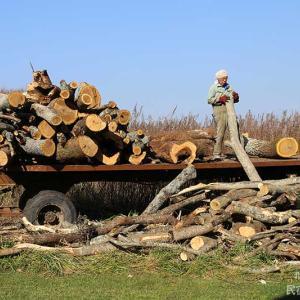 原木の山はお宝の山 | 薪ストーブと宿主
