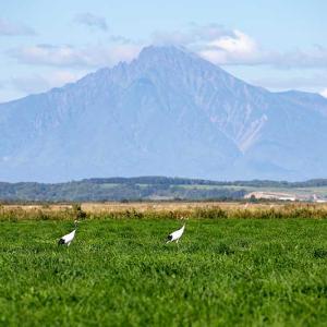 利尻山と丹頂鶴