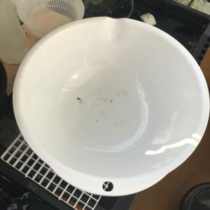 HOBO式針子容器の水替え