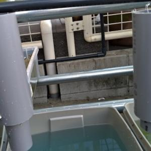 ミジンコの例のアレの容器を作る。