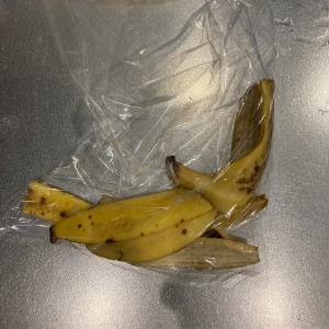えぇっ!?バナナの皮でミジンコが増えるだってェ!??