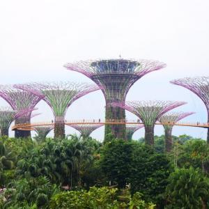 【シンガポールのシンボル】マリーナベイサンズを巡る旅。