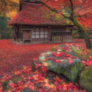 関東地方の年末の風物詩・酉の市、11月20日の今日は酉の市です。