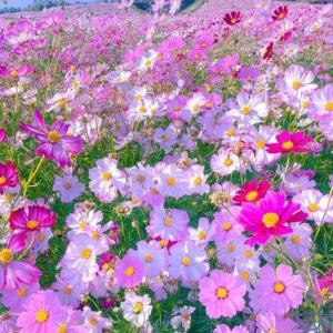 うつりゆく秋に、心の健康を守る感情は・・・!?