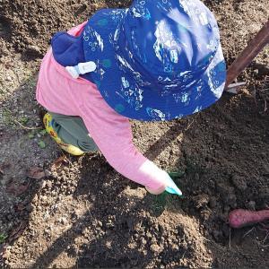 子どもの芋掘り体験は芋以外の収穫がある
