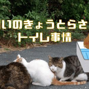 多頭飼いのトイレ事情を暴露!猫のきもちになったら清潔を保ちたい