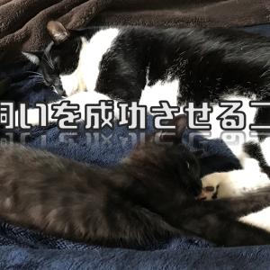 多頭飼い成功のコツは先住猫|猫同士が仲良くできる相性を熟考しよう