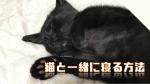 猫と暖かい布団で一緒に寝る方法!寝相が良い人が得をする