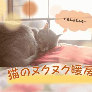 暖房器具を使って、猫のヌクヌクした暖かい冬を!【適温は20度】