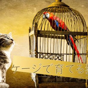 ケージで育てる猫生活|危険がわかる年ごろになったらケージから出そう!