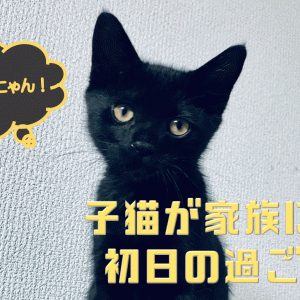 子猫ちゃんこんにちは!新しい家族と過ごす初日は楽しみがいっぱい!