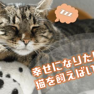 幸せになりたければ、猫を飼えばいい!【猫を3匹飼い始めて幸せになった話】