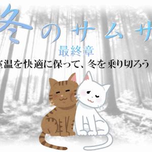 猫は寒さに弱い?室温を快適に保って、冬を乗り切ろう!