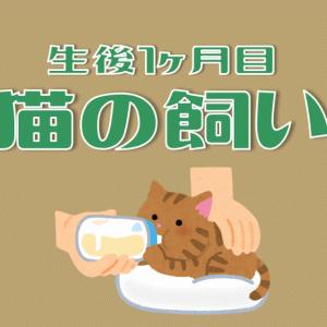 生後1ヶ月目の子猫の飼い方|ミルクのあげ方・トイレトレーニング