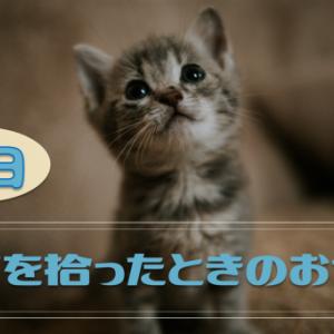 小さい子猫を拾ったら、今日すぐにやってあげたいお世話
