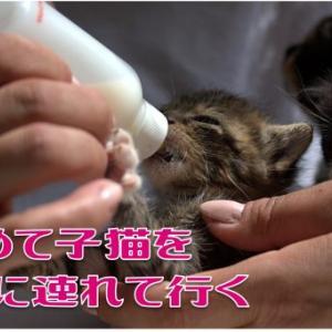 初めて子猫を病院に連れていく!初診料・連れて行き方をくわしく解説