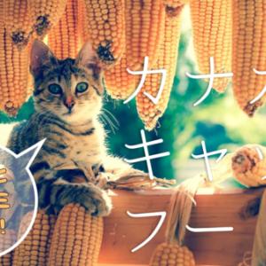 カナガンキャットフードの評判と口コミを徹底検証!子猫もすくすく育つ総合栄養食