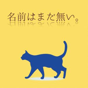 子猫の体重の測り方
