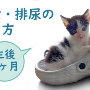 ミルク飲み子猫の排泄・排尿の簡単なやり方【生後1ヶ月】