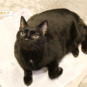 猫、市の行事に興味を示す