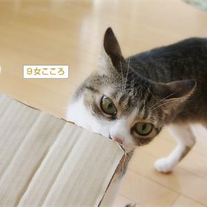 猫猫プレゼント