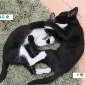 子猫タイフーン