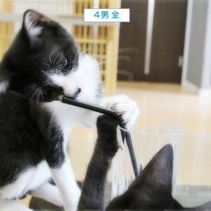 子猫のブーム