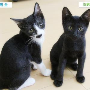 子猫の写真をきれいに撮るには?