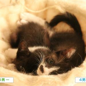 子猫、鼻血もの写真(新刊のおしらせ)