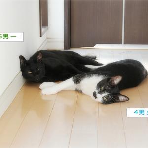 猫の温度計