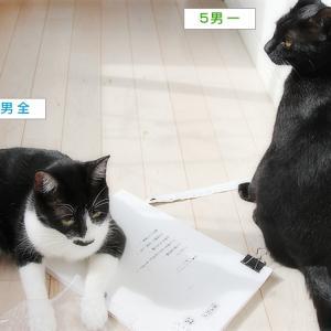 ゲラチェックしてくれる猫編集さん