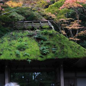 今日は京都の安楽寺です