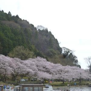 今回は滋賀県琵琶湖のきた、海津大崎の桜です。