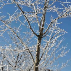 雪景色・・1