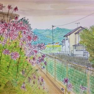 コスモスが咲いている風景をスケッチ