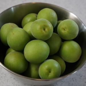 一晩で作る梅シロップ。