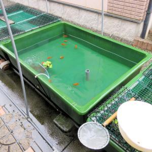 弐歳魚のラン活
