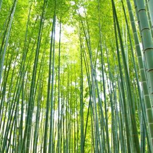 【言葉】「竹有上下節(たけにじょうげのふしあり)」が表す意味とは