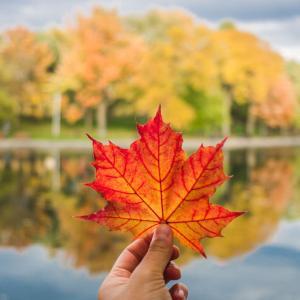 モントリオールで紅葉を見るならここ!